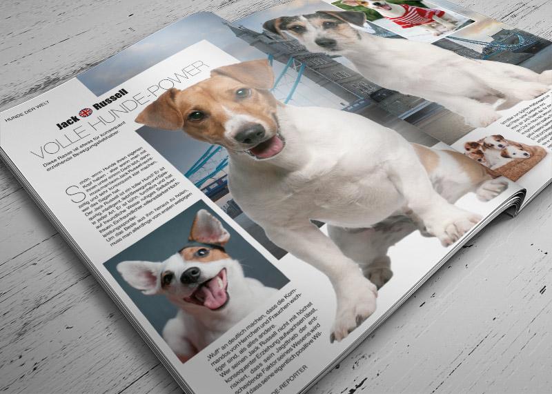 Hundereporter 34 Vorschau