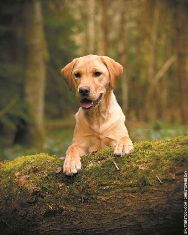 Hund-Labrador-Galerie-003