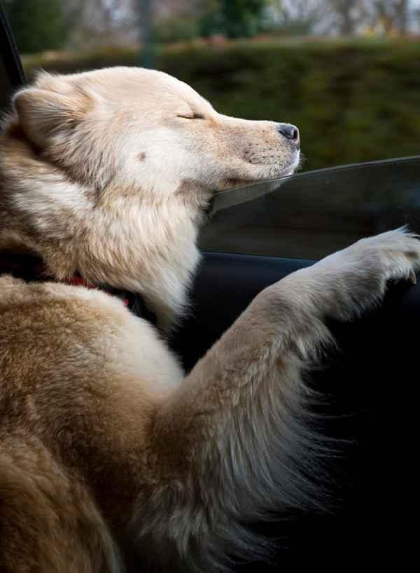 hund-auto-fahren-wind-lustig-005
