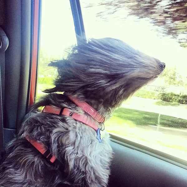 hund-auto-fahren-wind-lustig-007