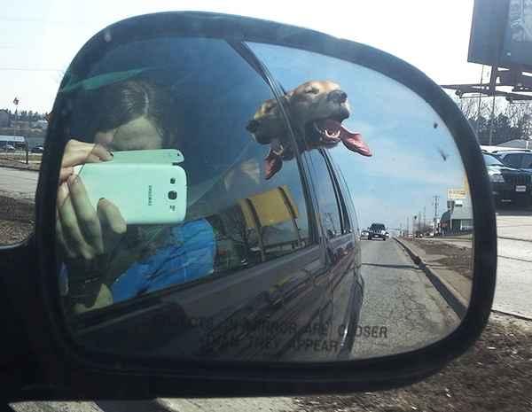 hund-auto-fahren-wind-lustig-009