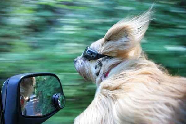 hund-auto-fahren-wind-lustig-012