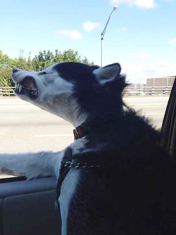 hund-auto-fahren-wind-lustig-013