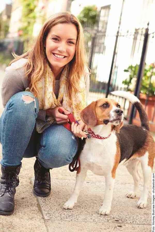 hund-beagle-galerie-006