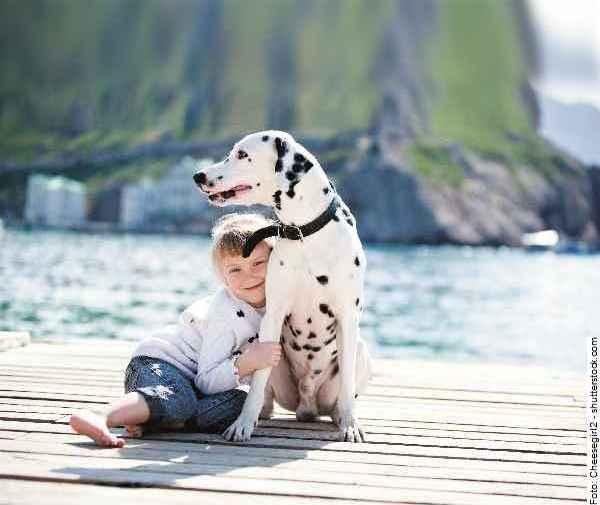 hund-dalmatiner-galerie-004
