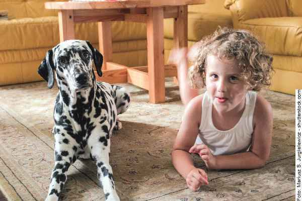 hund-dalmatiner-galerie-005