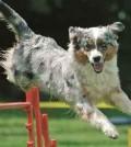hunde-sport-galerie-reporter-001