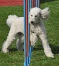 hunde-sport-galerie-reporter-015