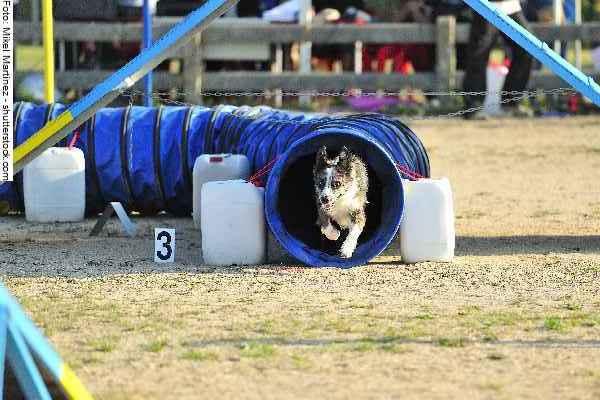 hunde-sport-galerie-reporter-022
