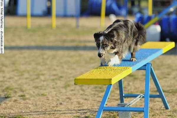 hunde-sport-galerie-reporter-023