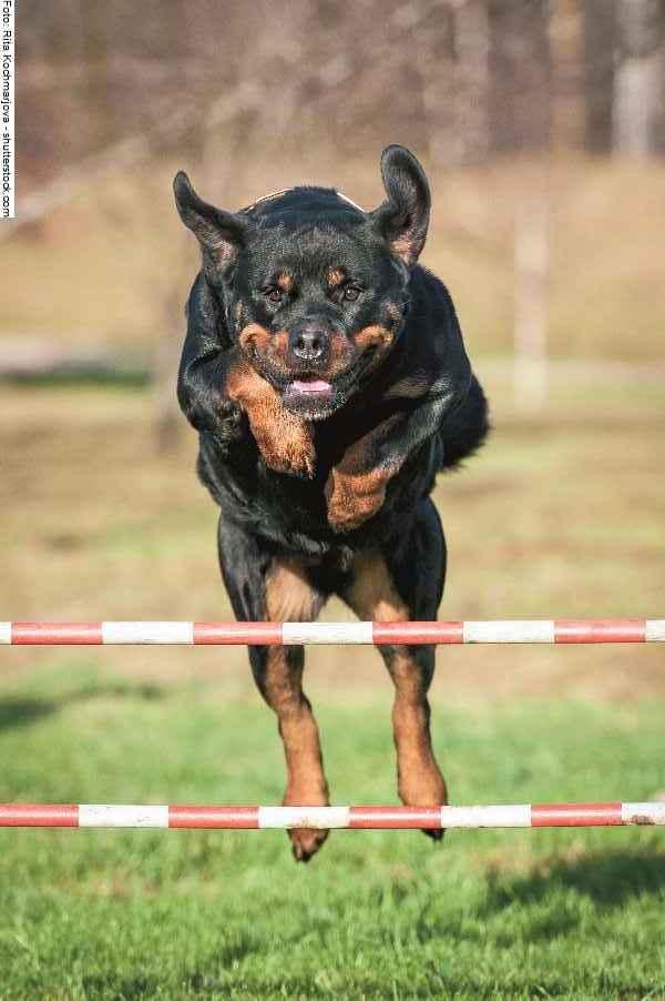 hunde-sport-galerie-reporter-024