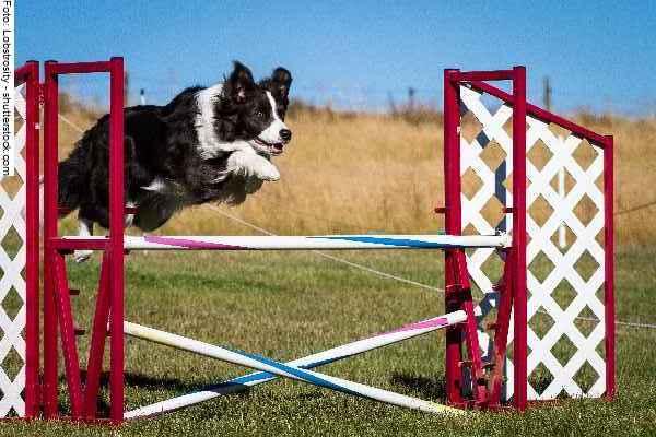 hunde-sport-galerie-reporter-027
