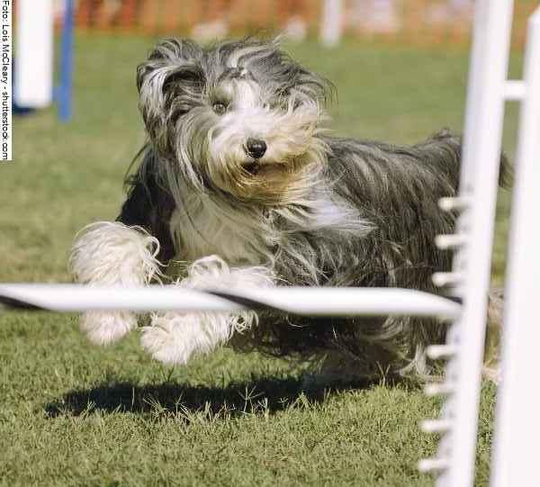 hunde-sport-galerie-reporter-030