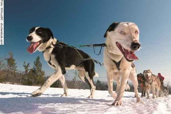 hunde-sport-galerie-reporter-034