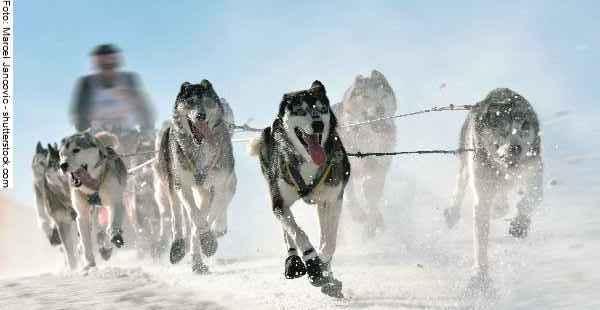hunde-sport-galerie-reporter-035