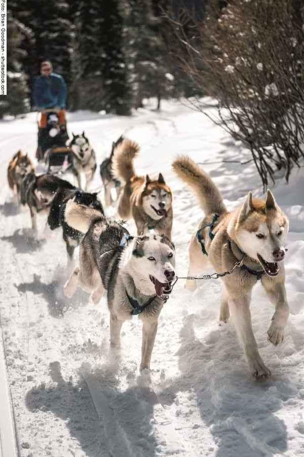 hunde-sport-galerie-reporter-036