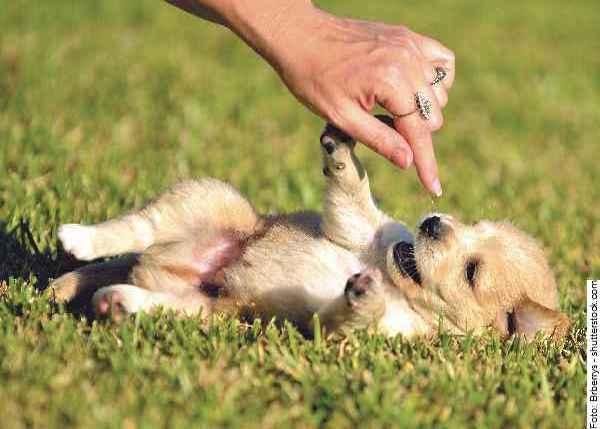 hunde-welpen_part01_038