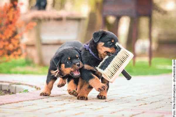 hunde-welpen_part01_061