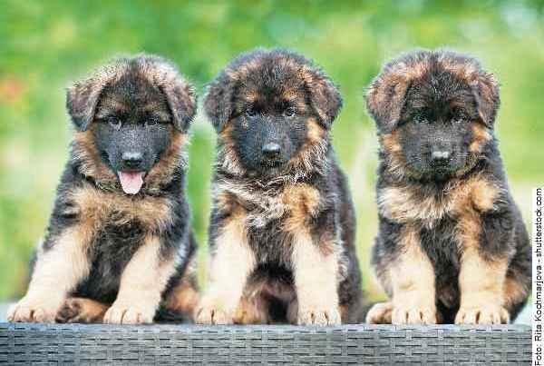 hunde-welpen_part01_065