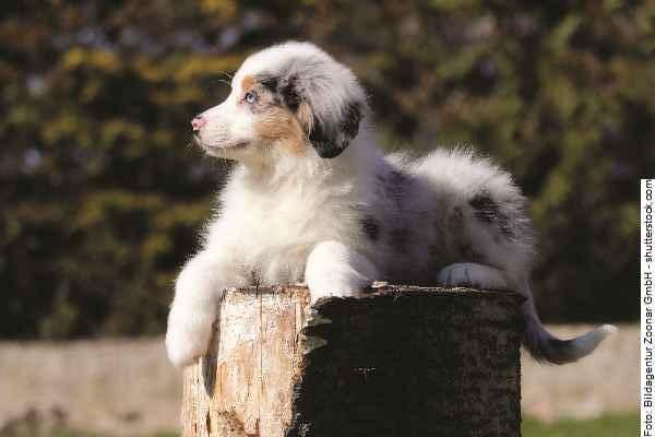 hunde-welpen_part01_067