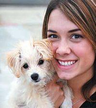 Hybridhunde - Der Maltipoo