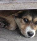 Angsthunde - Ein Artikel aus dem Hundereporter Magazin Ausgabe 2