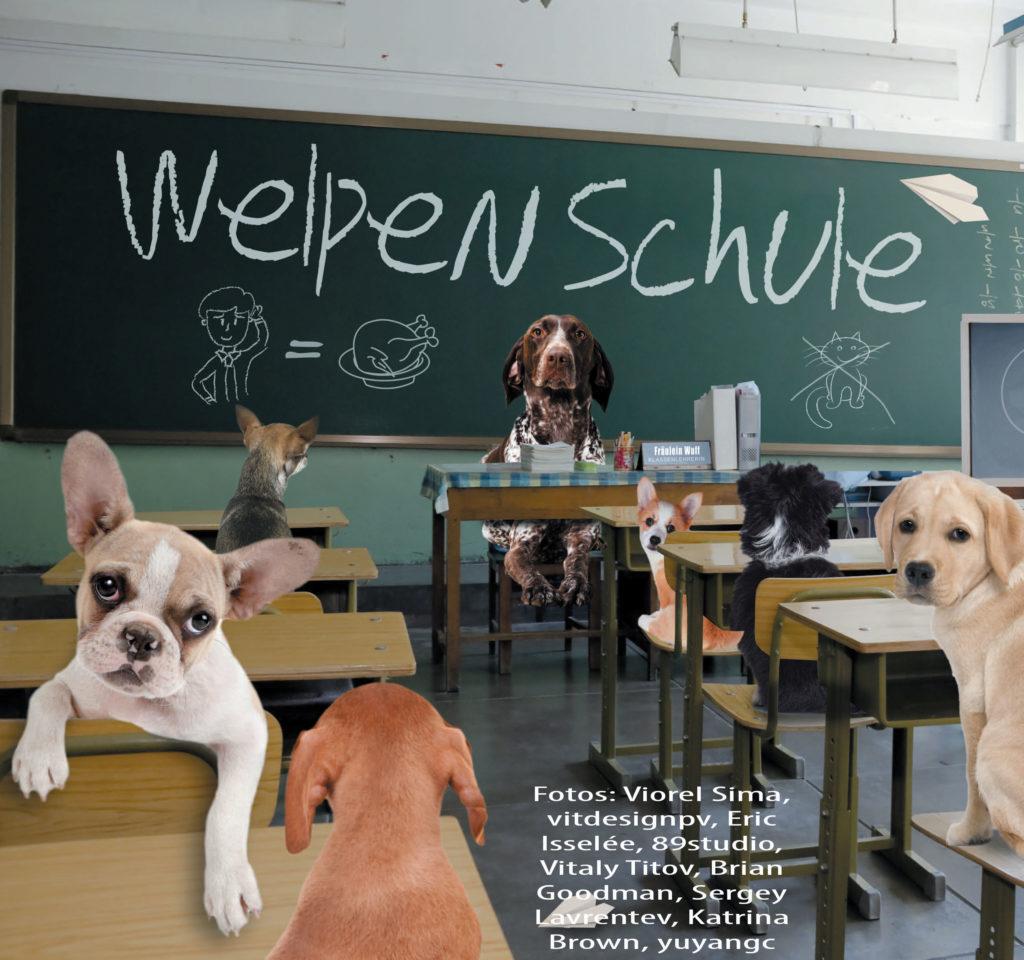 Welpenschule - Ein Artikel aus dem Hundereporter Mgazin Ausgabe 3