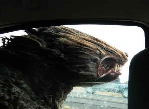 hund-auto-fahren-wind-lustig-001