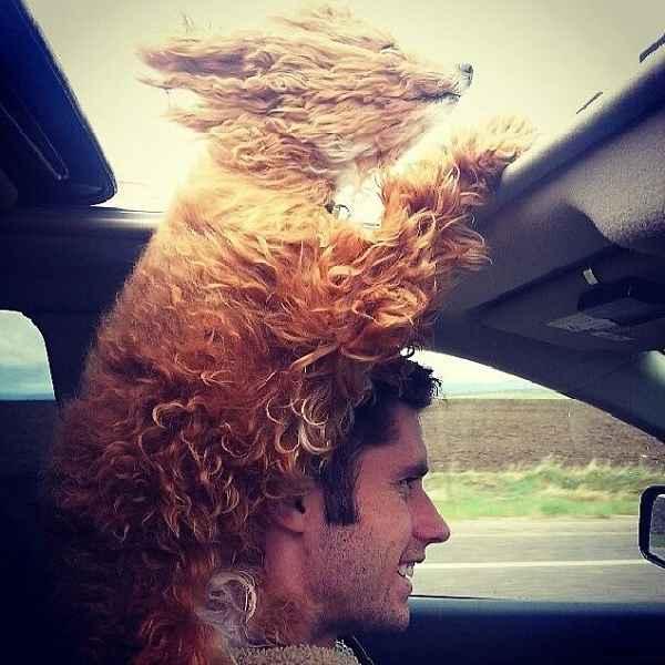 hund-auto-fahren-wind-lustig-002