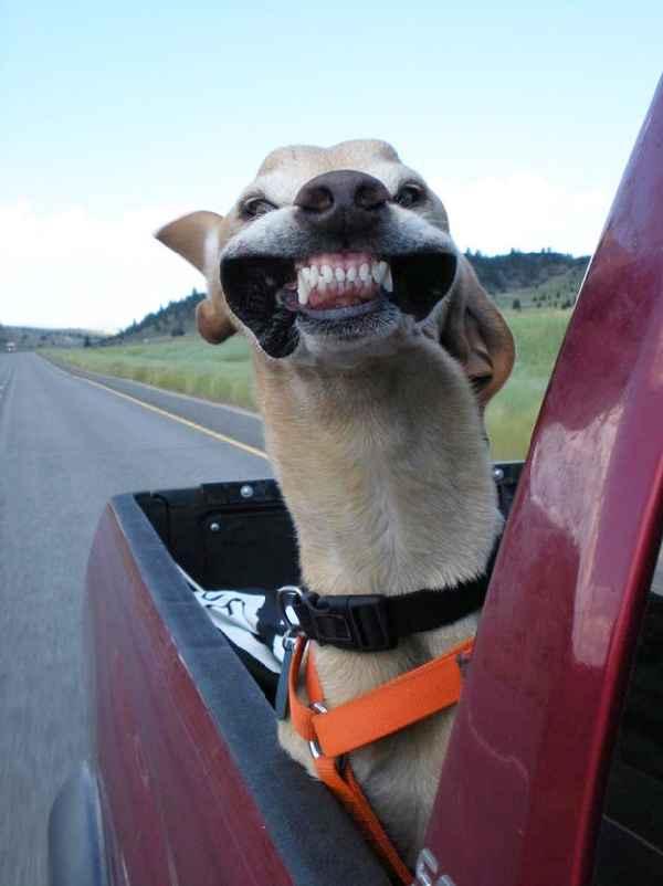 hund-auto-fahren-wind-lustig-003