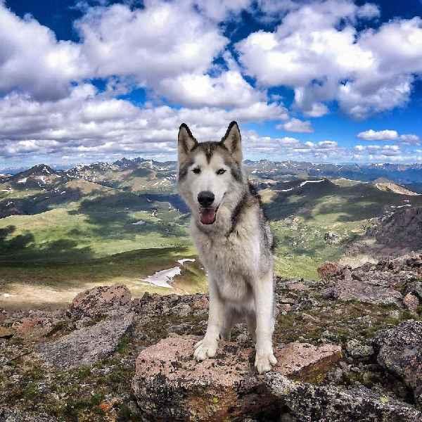 hund-freiheit-Loki-the-Wolfdog-001