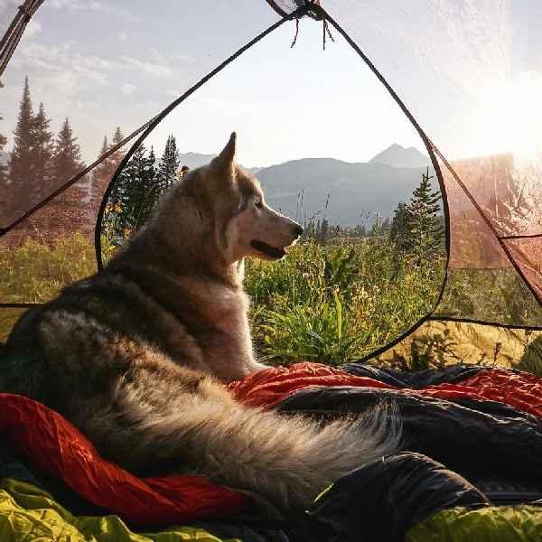 hund-freiheit-Loki-the-Wolfdog-004