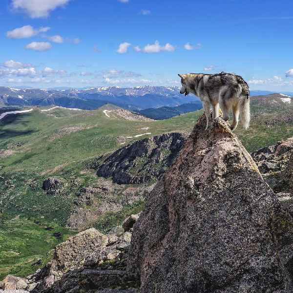 hund-freiheit-Loki-the-Wolfdog-005