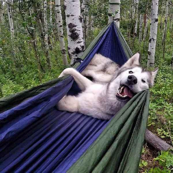 hund-freiheit-Loki-the-Wolfdog-007