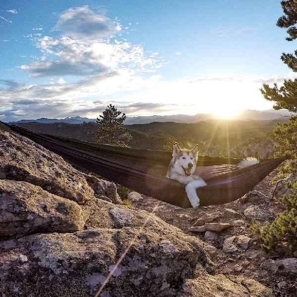 hund-freiheit-Loki-the-Wolfdog-009