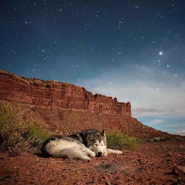 hund-freiheit-Loki-the-Wolfdog-012