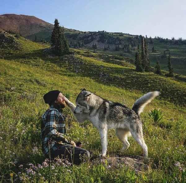 hund-freiheit-Loki-the-Wolfdog-016