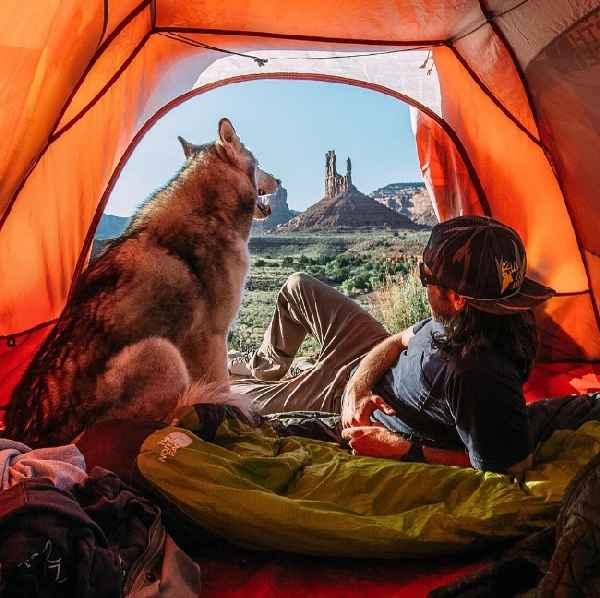 hund-freiheit-Loki-the-Wolfdog-017
