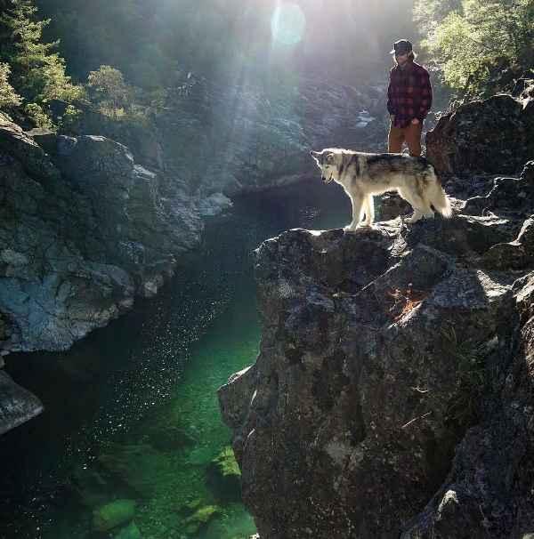 hund-freiheit-Loki-the-Wolfdog-018