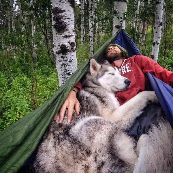 hund-freiheit-Loki-the-Wolfdog-019