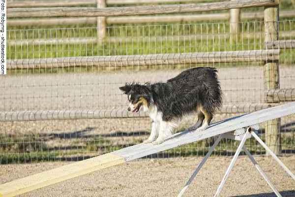 hunde-sport-galerie-reporter-028