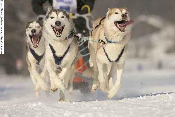 hunde-sport-galerie-reporter-031
