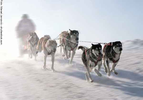 hunde-sport-galerie-reporter-037