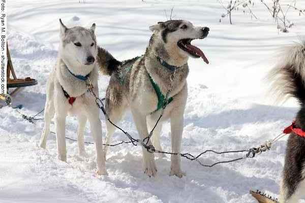 hunde-sport-galerie-reporter-038
