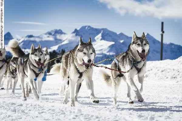 hunde-sport-galerie-reporter-039