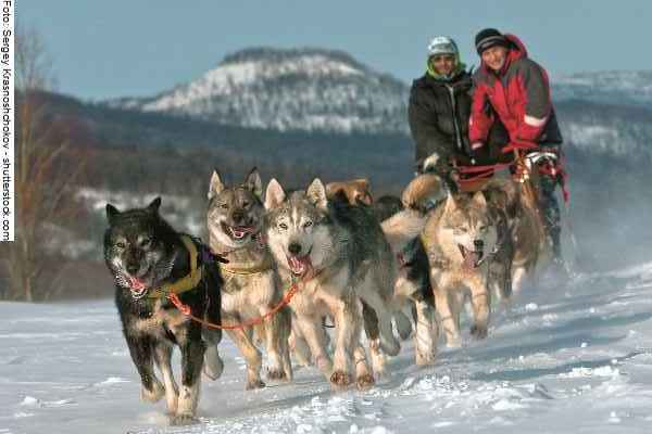 hunde-sport-galerie-reporter-040