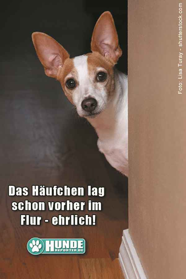 shutterstock_61081258_LisaTuray_b