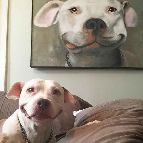 smiling-dog-stray-pit-bull-adopted-brinks-01