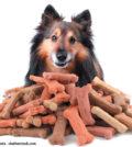 Futtermittel - Was soll in den Napf? - Ein Artikel aus dem Hundereporter Magazin Ausgabe 2