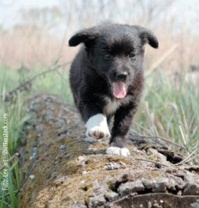 Waldspiele - Ein Artikel aus dem Hundereporter Magazin Ausgabe 3